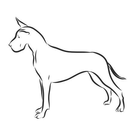 Great Dane dog vector illustration. Purebred dog vector illustration. Hand drawn dog sketch.