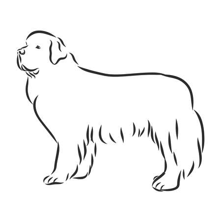 vector black and white sketch of the dog Newfoundland breed sitting