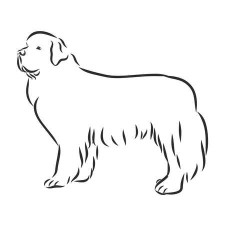 vector black and white sketch of the dog Newfoundland breed sitting Vektoros illusztráció
