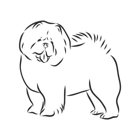 Decorative black and white Dog Chow Chow vector illustration