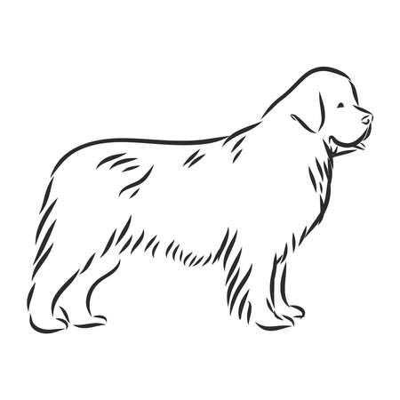 vecteur, noir et blanc, croquis, de, les, chien terre-neuve, race, séance