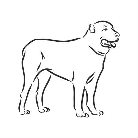 Alabai Central Asian shepherd, contour vector illustration