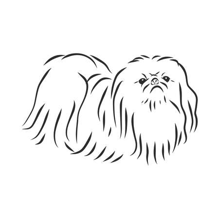 Decorative portrait of standing in profile Pekingese, vector isolated illustration in black color on white background