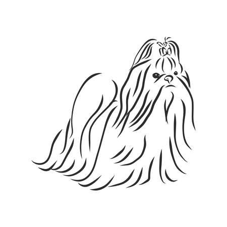 hand drawn sketch of Shih Tzu dog girl