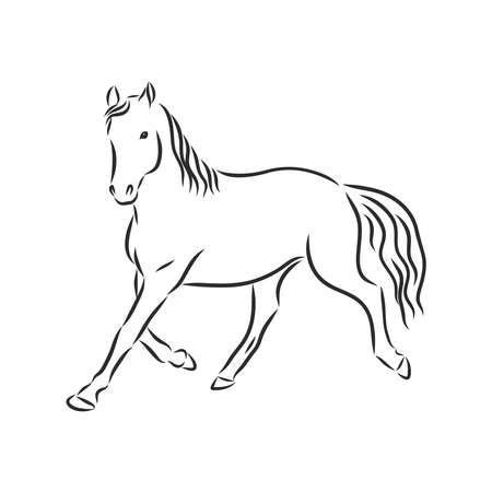 Hand draw horse. Vector isolated on a transparent background 向量圖像
