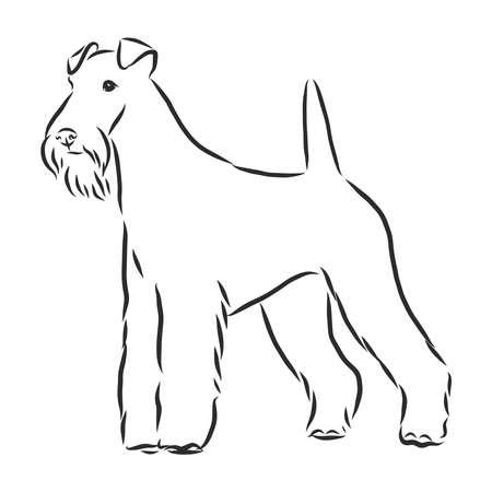 foxterrier dog sketch, contour vector illustration, hand drawing