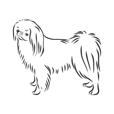 Decorative portrait of standing in profile Japanese Chin, vector isolated illustration in black color on white background