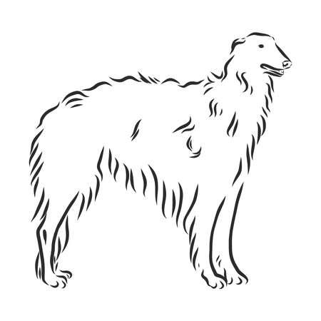 Russische borzoi, hondschets, jachthondcontour vectorillustratie