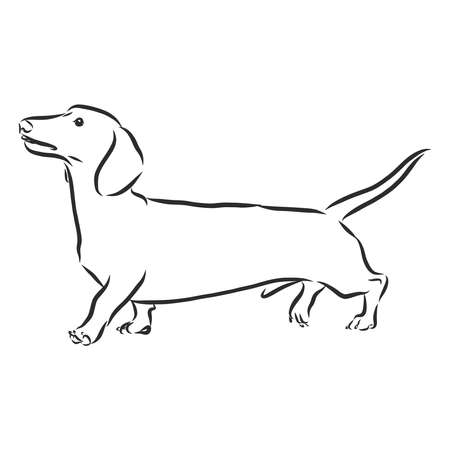 vector drawings sketch drawn dachshund in ink by hand , objects with no background