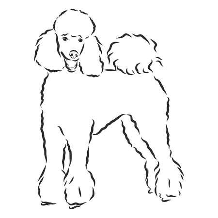 Poodle dog - vector illustration Ilustração Vetorial
