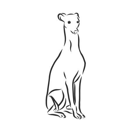 Greyhound, met mannelijke hond, gegraveerde afbeelding. Vector Illustratie
