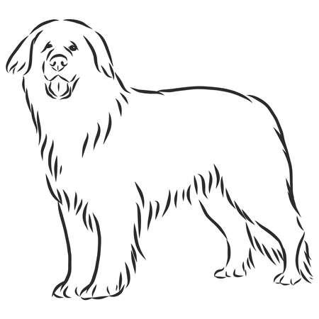 leonberg dog sketch, contour vector illustration Ilustração