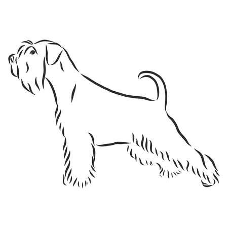 Retrato decorativo de pie en perfil perro Schnauzer miniatura, vector ilustración aislada en color negro sobre fondo blanco.