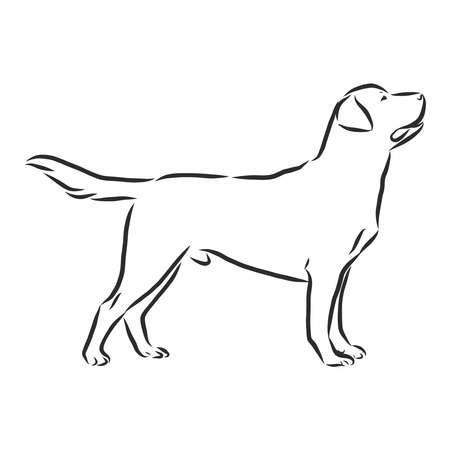 Labrador Retriever dog. Isolated outlined sketch, logo contour vector illustration Logo