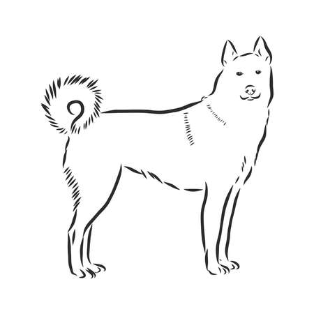 Single continuous line drawing of simple cute siberian husky puppy dog icon. Pet animal logo emblem vector concept. One line draw design illustration