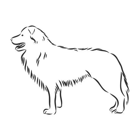 Border collie vector isolated hand drawing illustration in black color on white background
