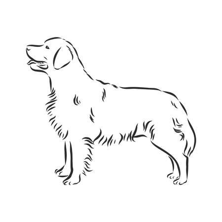 Decorative portrait of standing in profile dog golden retriever, vector isolated illustration in black color on white background Illusztráció