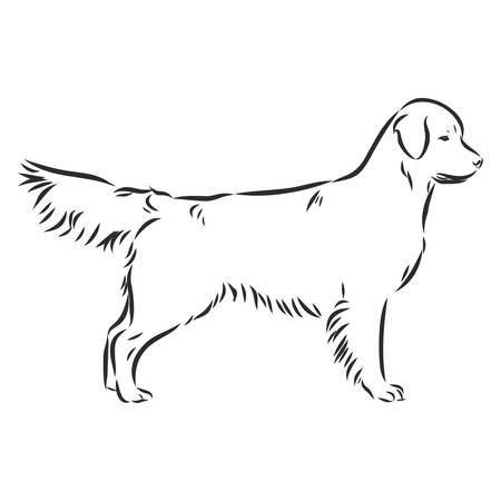 Decorative portrait of standing in profile dog golden retriever, vector isolated illustration in black color on white background Ilustração