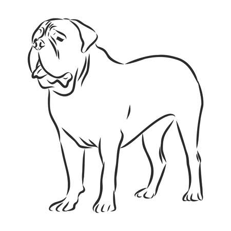 French Mastiff, dog sketch,contour vector illustration