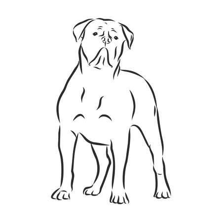 Mastiff français, croquis de chien, illustration vectorielle de contour