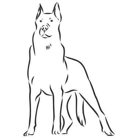 the Beauceron , French shepherd dog sketch, contour vector illustration