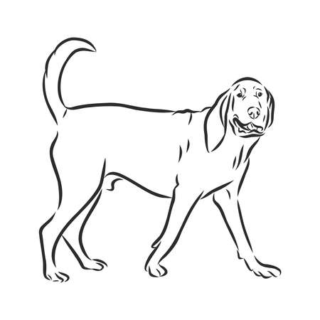 black and white illustration of a lying bloodhound dog