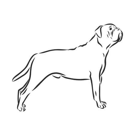 bullmastiff dog sketch, contour vector illustration