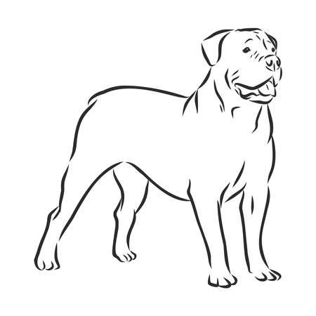 Boerboel dog sketch, contour vector illustration , domestic dog