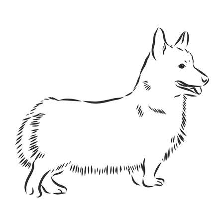 Welsh Corgi dog sketch, contour vector illustration