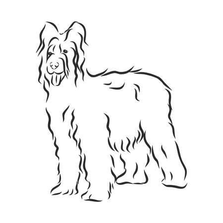 Briard French shepherd dog sketch, contour vector illustration