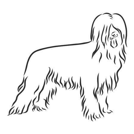 Briard French shepherd dog sketch, contour vector illustration