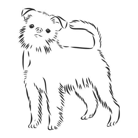 Brussels griffon dog breed vector portrait in black color isolated on white background