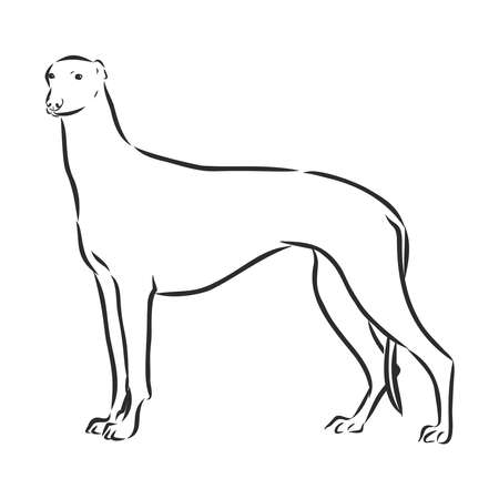 Illustration Greyhound Dog was created in doodling style in black and white colors. Painted image is isolated on white background. It can be used for coloring books for adult.