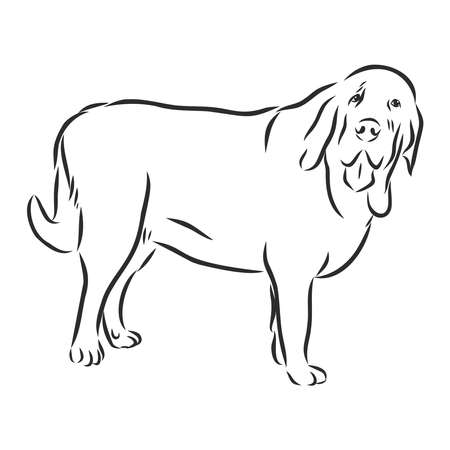 Decorative contour portrait of standing in profile Spanish Mastiff dog, vector isolated illustration in black color on white background