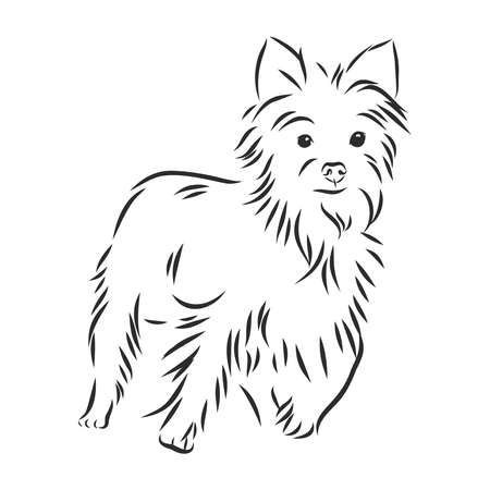 Yorkshire Terrier dog - hand drawn vector llustration isolated Ilustrace