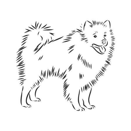 Wolfspitz dog sketch, contour vector illustration Illustration