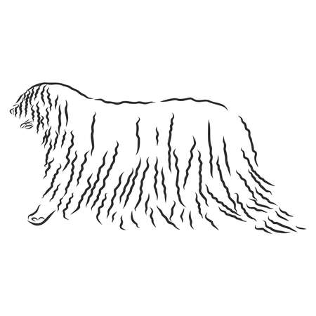 The Komondor , also known as the Hungarian sheepdog, is a large, white-coloured Hungarian breed of livestock guardian dog with a long