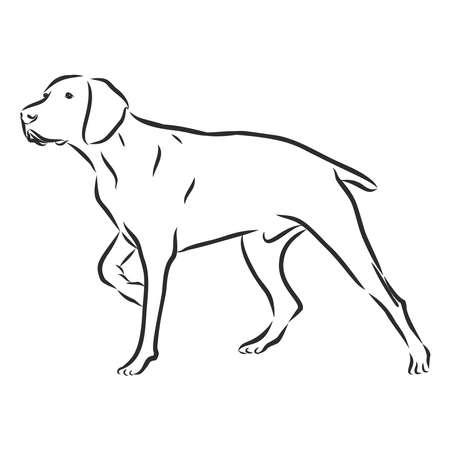 razza di cane da caccia puntatore inglese, vista laterale, illustrazione in bianco e nero Vettoriali