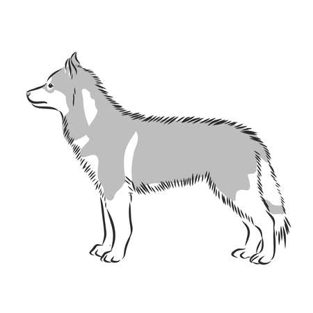 Husky dog vector illustration isolated on white background