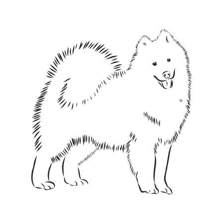 Samoyed dog breed vector illustration from the dog show sign symbol set. Working dogs breed from Siberia, used as a sled dog, a reindeer herder, a guard dog, as a companion to hunters and fishermen