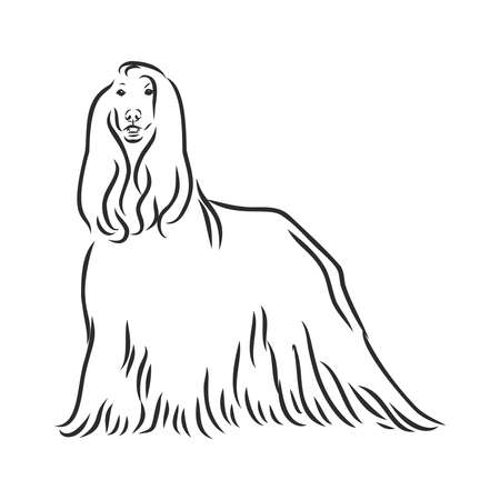 Vector sketch of the black dog Afghan Hound breed