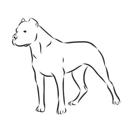 great Dane Argentine, dog sketch, contour vector illustration