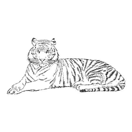 tiger drawn with ink