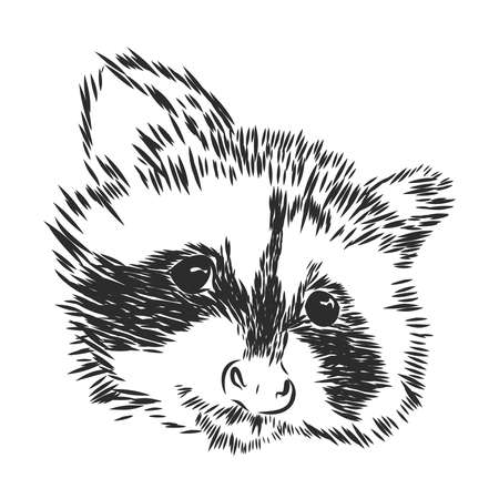 Raccoon. Sketchy, graphic portrait of a raccoon on a white background.