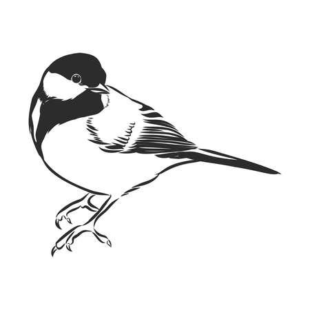 noir et blanc graver illustration vectorielle tit isolé