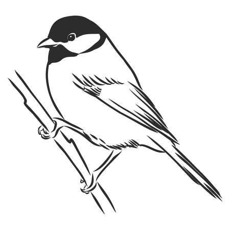 noir et blanc graver illustration vectorielle tit isolé Vecteurs