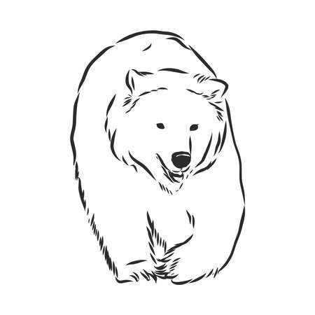 Bear sketch drawing isolated on white background Çizim