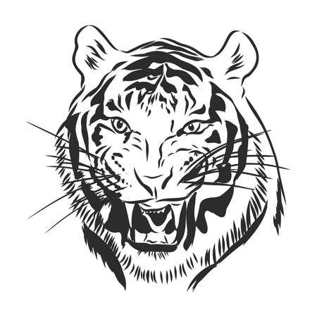 tiger head engraving vector illustration, hand drawn, sketch