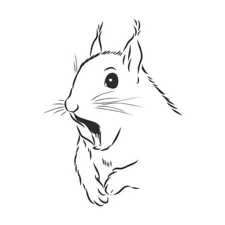 Linda ardilla, retrato de roedor salvaje, ilustración de dibujo vectorial