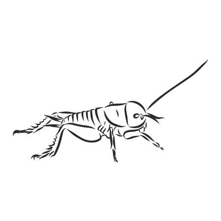 insect cricket, bug symbol, vector sketch illustration,